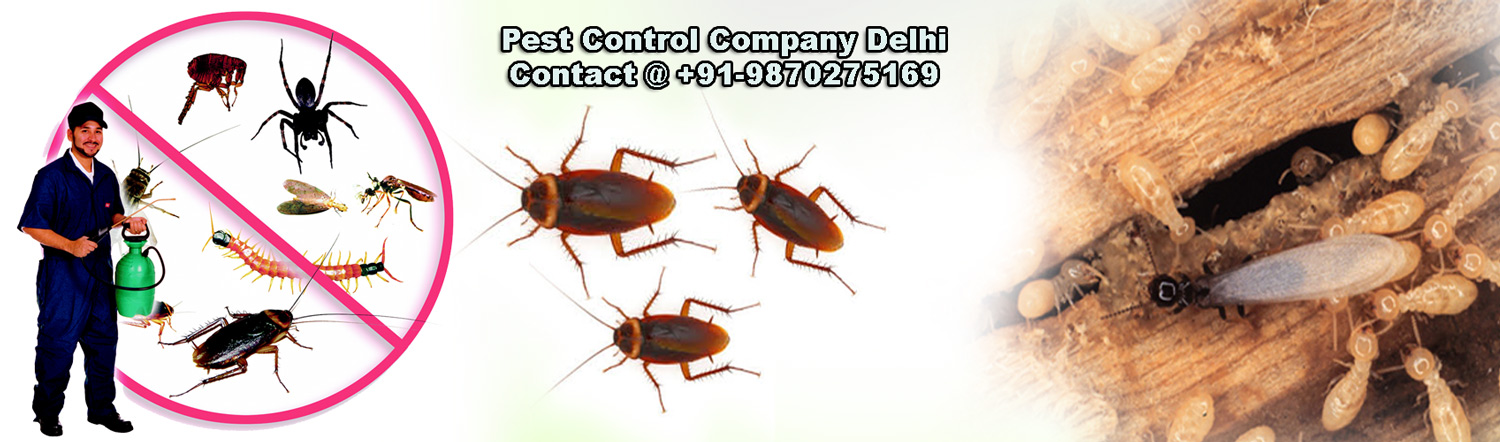 Best Pest Control Company Delhi Services